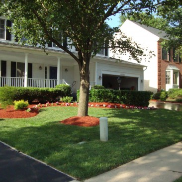 Lawn and Yard Maintenance